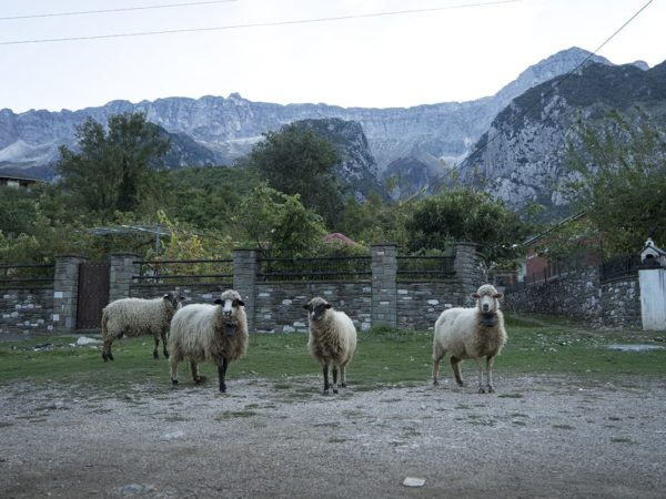 Albania: All roads lead to Vjosa