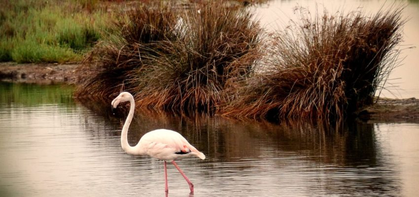 Montenegro: Ulcinj Salina – the value of money or the value of nature?
