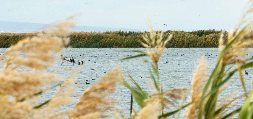 Armenia: Armash Fishponds