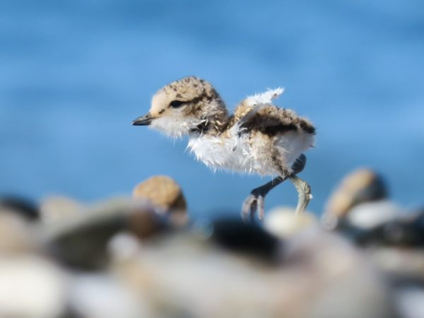 🇪🇸 [Spain] 🐦 Where is biodiversity on the beach?